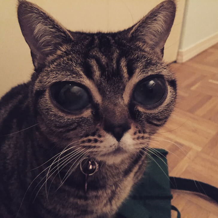 26 Beautifully Different Pets Whose 'Flaws' Stole Our Hearts