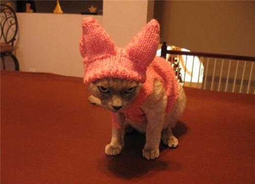 Easter bunny cat knitted hat