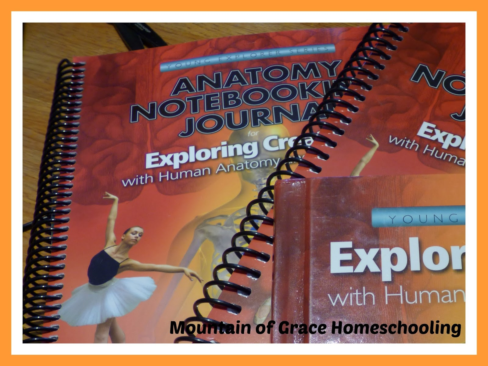 Mountain Of Grace Homeschooling Review Exploring Creation With