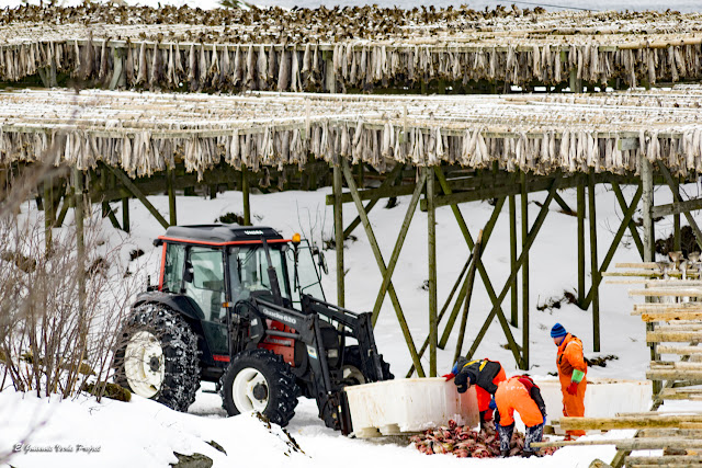 Islas Lofoten, pescadores de Henningsvaer por El Guisante Verde Project