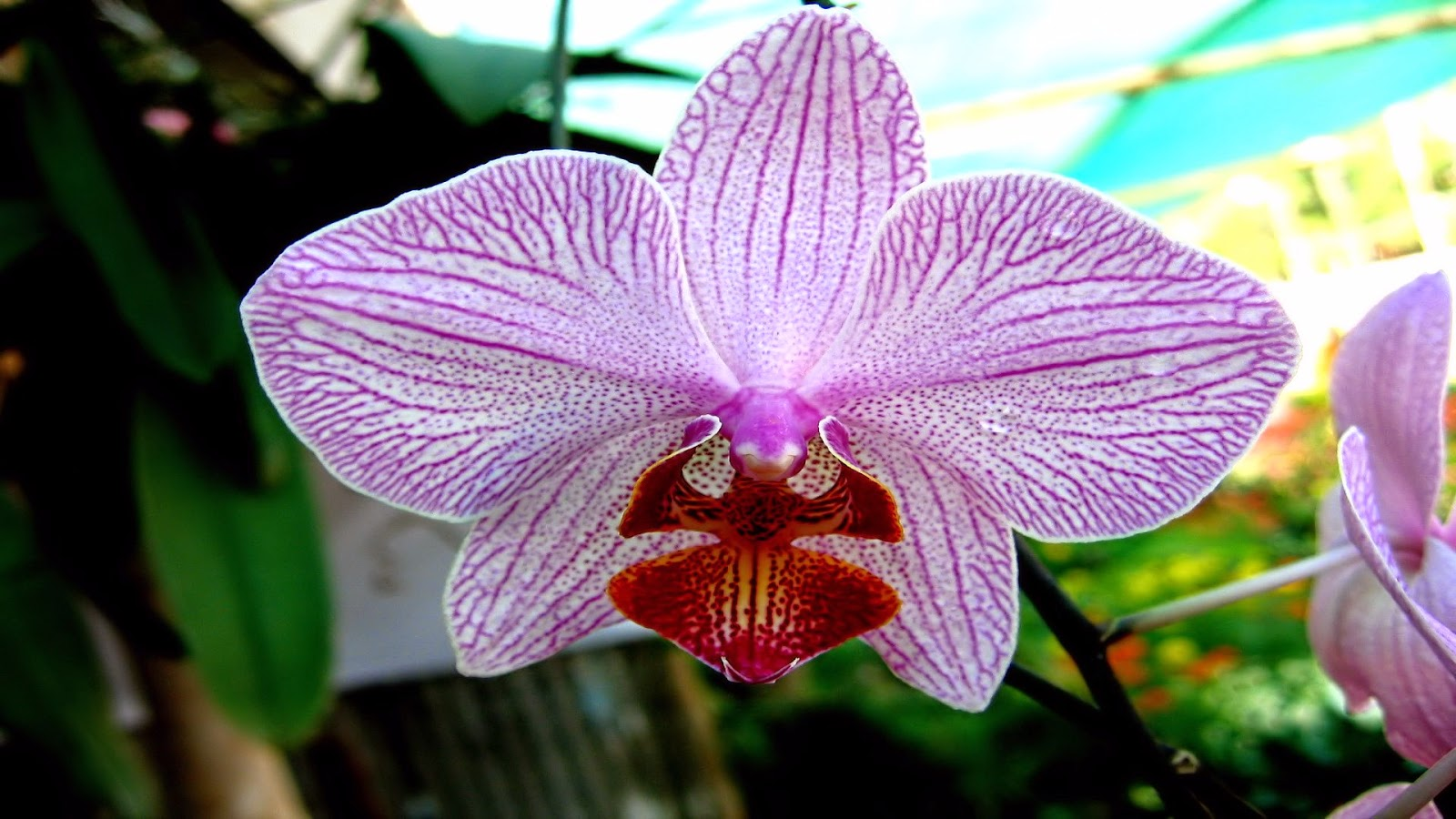 Orchid-flower-picture-single-closeup-shot-HD-photo.jpg