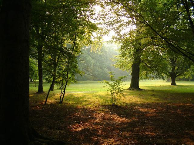 Orman manzara resmi