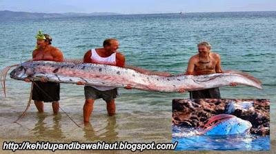 http://kehidupandibawahlaut.blogspot.com/