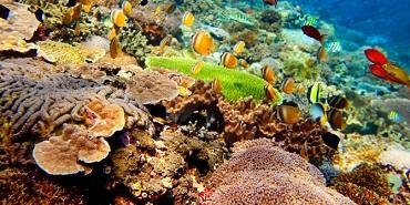 58 Gambar Struktur Tubuh Hewan Porifera HD Terbaru