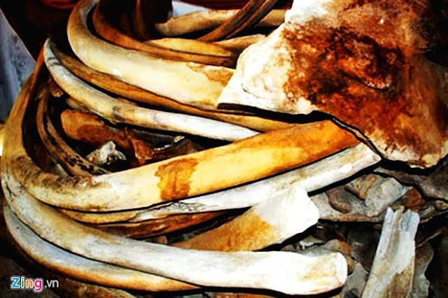 'Bảo tàng' xương cá voi ở Lý Sơn - Hình 8