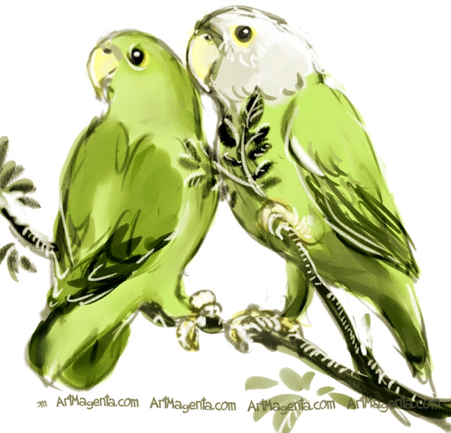 Grey-headed Lovebird  sketch painting. Bird art drawing by illustrator Artmagenta