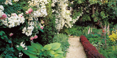 Transforming a Small Garden: 7 Simple Steps