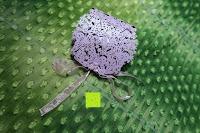 fertig: 50pcs Wedding Candy Boxes Butterfly Laser Cut Kartonage Schachtel Bonboniere Geschenkbox Hochzeit (Purple)