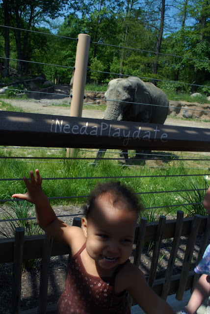 Elephants at the Cleveland Metroparks Zoo