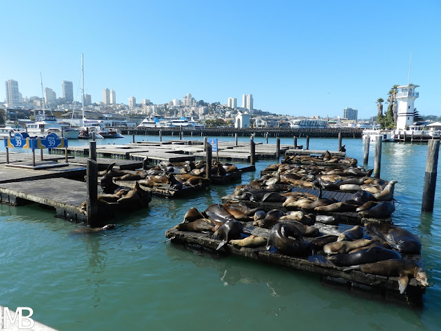 leoni marini pier 39 san francisco california