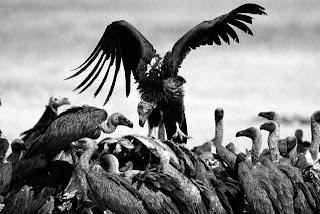 Resultado de imagem para abutres, fundos imobiliários