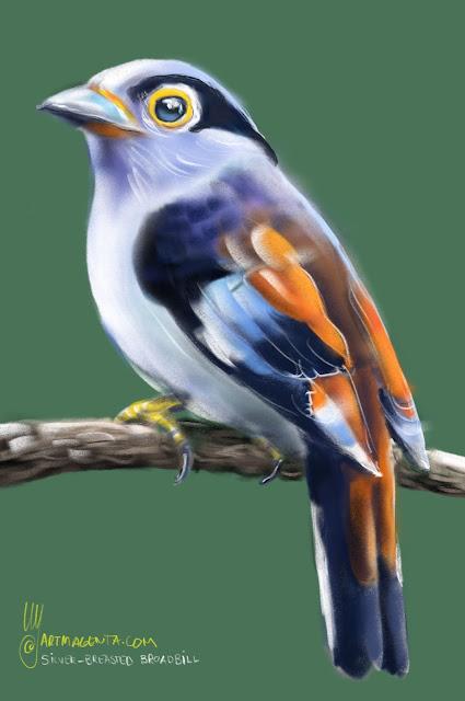 Silver-breasted broadbill  bird painting by Artmagenta