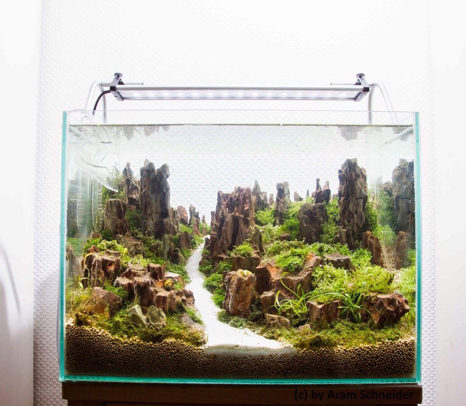 aram schneider aqua scaping 40x30x30cm becken geflutet. Black Bedroom Furniture Sets. Home Design Ideas