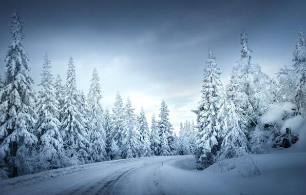 20 фото красивой зимы