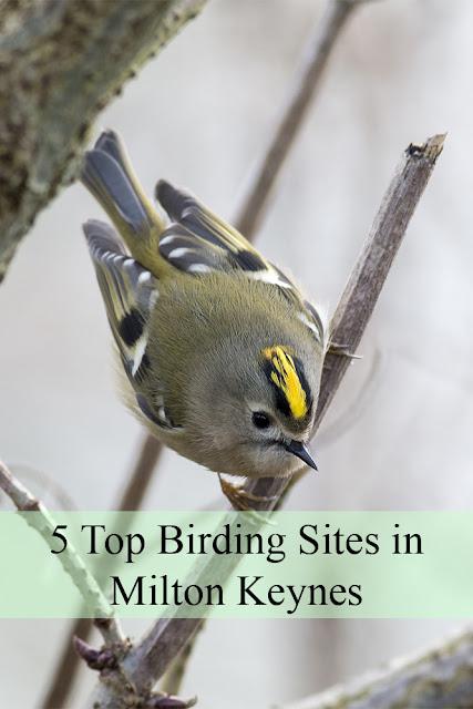 5 Top Birding Sites in Milton Keynes