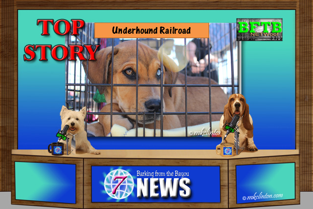 BFTB NETWoof News Top Story is the Underhound Railroad