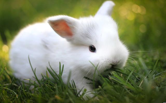 Hướng dẫn cách chăm sóc thỏ