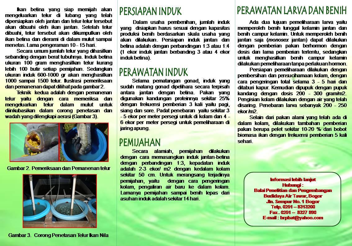 Teknologi Perbenihan Ikan Nila Best Suluh Mina Tapandang Berseri Produk Ukm Bumn Sumber Http Komunitaspenyuluhperikananblogspotcom By Fahrur Razi Sst