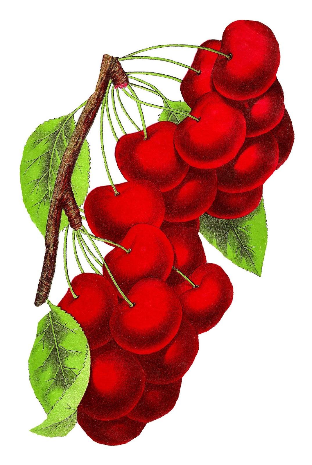 digital cherry clipart image [ 1074 x 1600 Pixel ]