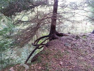 Ein Baum, der sich mit seinen Wurzeln festhält und daher am Abgrund wachsen kann.