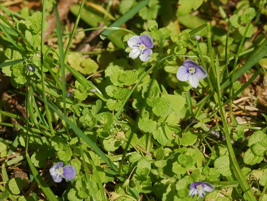 Common Michigan Wildflowers