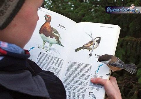 funny animals birds picture