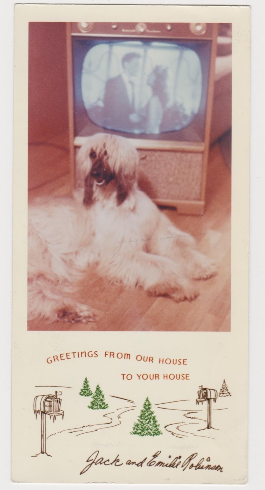 Family Pets In Bizarre And Fabulous Vintage Holiday Greeting Cards