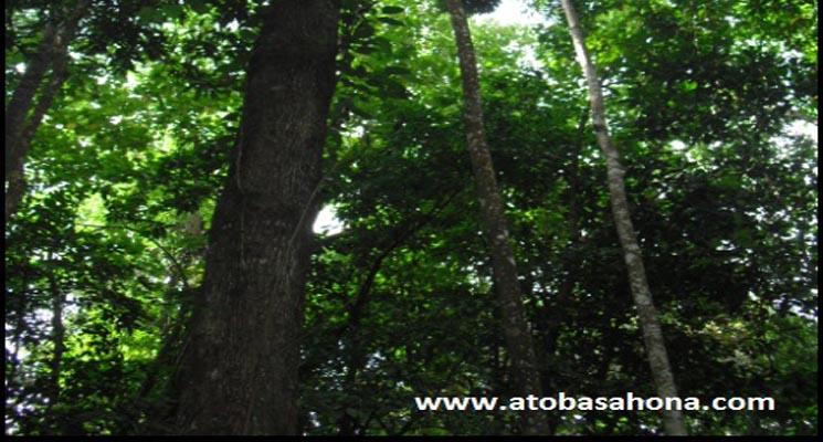 Kerapatan Tajuk Pohon