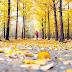 Lại một mùa thu về...