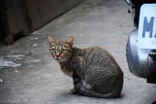 Inilah Yang Harus Di Persiapkan Kalau Ingin Memelihara Kucing.