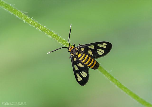 Contoh gambar serangga di ambil menggunakan lensa sigma 70-300mm macro
