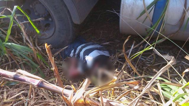 Acidente trágico envolvendo 3 caminhões, lança filho de 14 anos nas rodas da carreta do pai