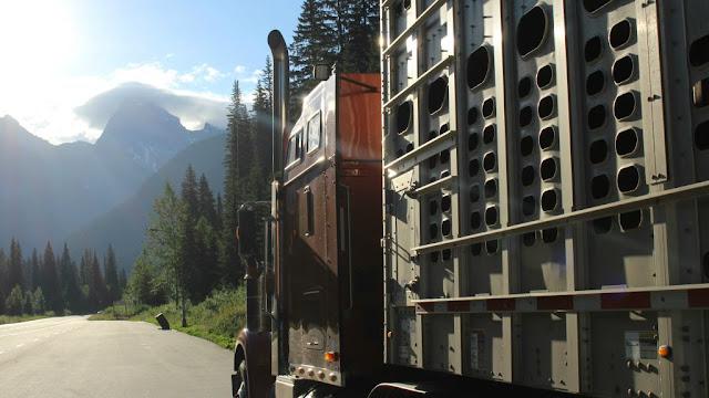 El camión con las Ovejas de Jacob Cruza las Montañas Rocosas de Canadá