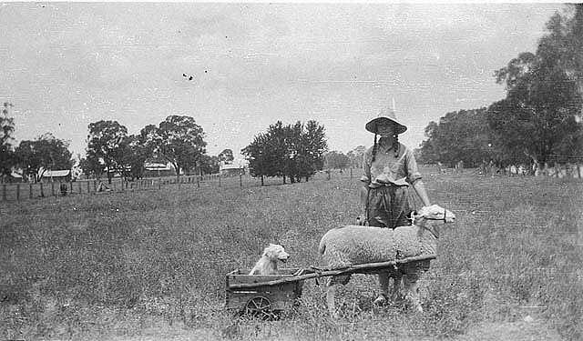 Yap Yap (dog) in cart pulled by Achong - Trundle, NSW, n.d., unknown photographer