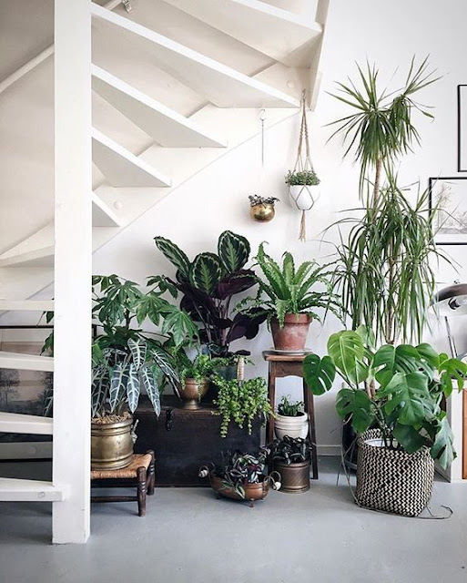 Decoración boho chic con plantas