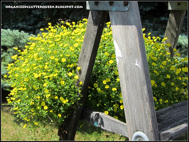 Add A Ladder To Your Flower Garden #junkgarden #gardenjunk #gardenladder #containergarden #rusticgarden