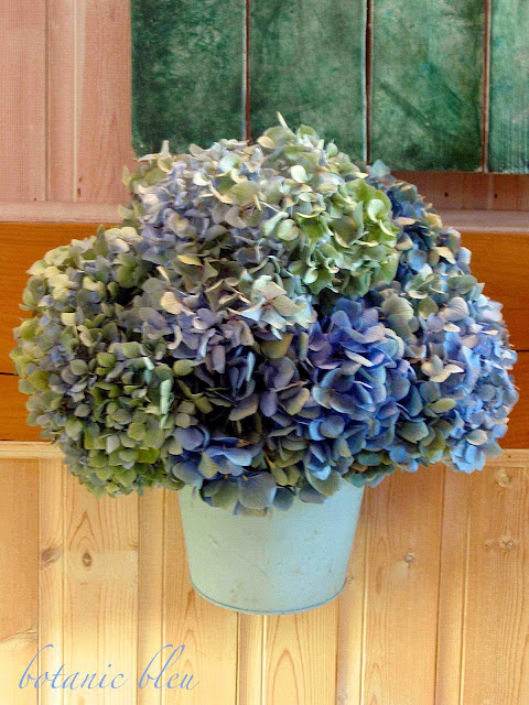 blue hydrangeas full of color and life sit in blue metal pots to dry