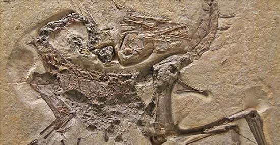 'Dinossauros da NASA' - terreno da Agência espacial está repleta de rastros de animais pré-históricos