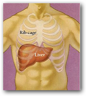 Liver disease (Liver) and its Relationship With Basil Leaves