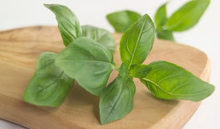 Basil Magical Benefits For Health Body
