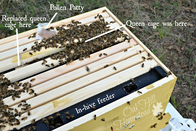 The bees were clustered around the queen's cage just like they should be.