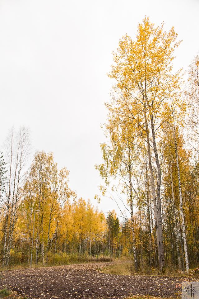 luonto, suomen luonto, lenkkeily, syksyn kauneus