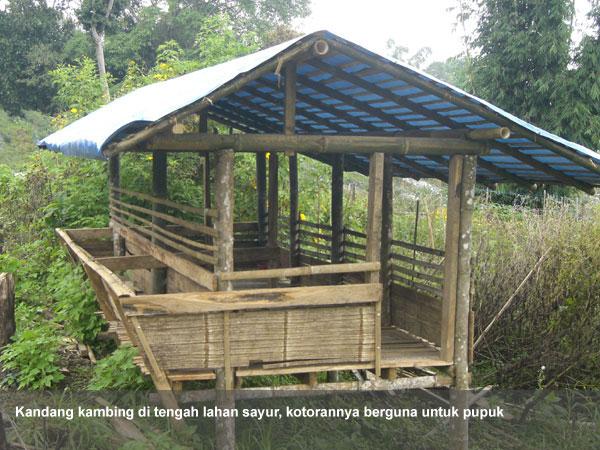 Biaya Kandang Kambing Dari Bambu - Kandang 1