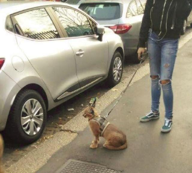 """Buongiornolink - """"Aiutateci a trovare il caracal a Milano"""", il felino pericoloso fotografato al guinzaglio come un cane"""
