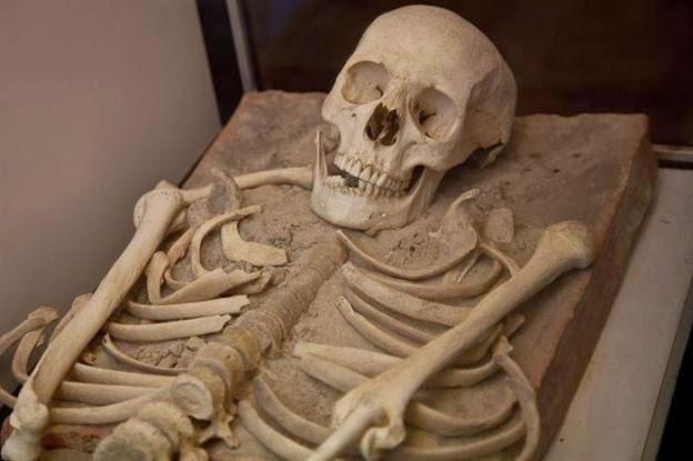Esqueleto mais antigo do mundo é encontrado, e sua idade ajuda a comprovar teorias sobre a humanidade