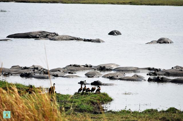 Mahango Game Reserve, Namibia