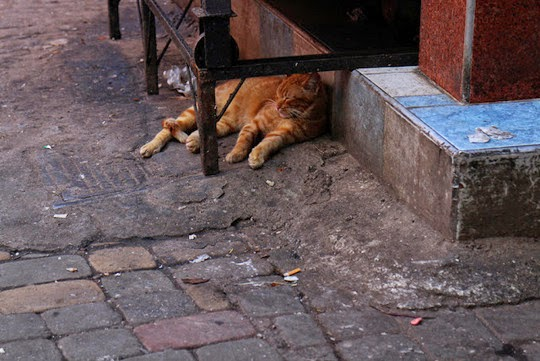 Marrakesh cats