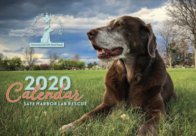 Safe Harbor Lab Rescue calendar, with a photo of a lab on a big expanse of grass