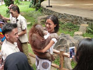 Taman Safari Indonesia Paksa Orangutan Hibur Manusia, IFOTA dan Scorpion Mengecam