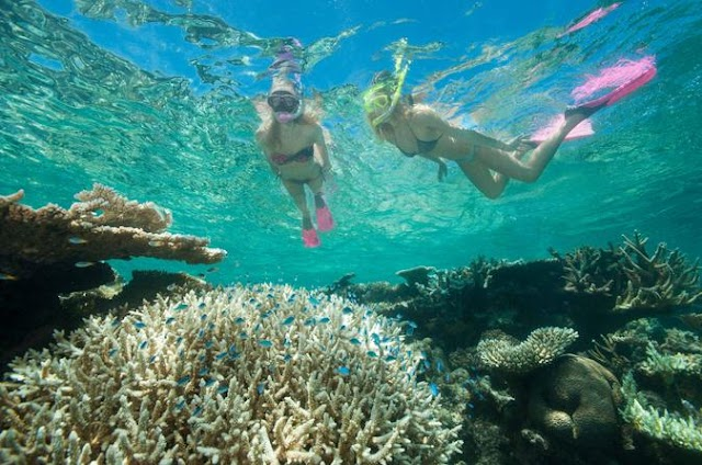 #Business, #Enviroment :  Up to US$760 million in lost revenue,for Tourism in Australia due damage of Great Barrier Reef
